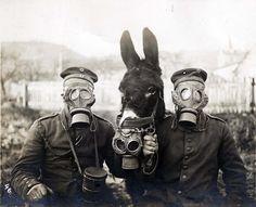 İki Alman askeri ve savaş alanında kullandıkları katır gaz Maskesi takıyor. 1916, 1. Dünya Savaşı  WW1, Two German soldiers and their mule wearing Gas Mask,1916