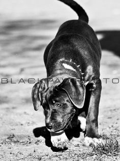 Silver Lake Dog Run - 4/21/11 - http://prints.blackpawphoto.com/galleries - #dogs #nyc #photography