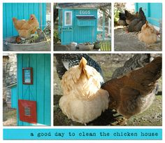 I wish I had the space to have my own chickens for eggs. I love this design, and color,