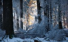 Snow forest trees winter sunlight light frost landscapes wallpaper | 1920x1200 | 52242 | WallpaperUP