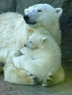 Cuddle bears