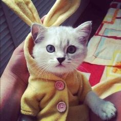 cats in clothes - Google Search