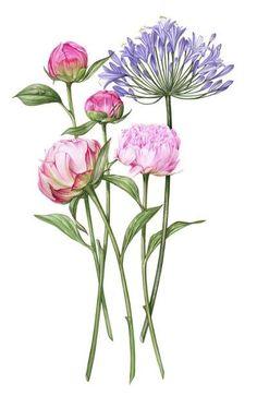 Watercolor flower portrait By Billy Showell Illustration Botanique, Illustration Blume, Arte Floral, Botanical Flowers, Botanical Prints, Watercolor Flowers, Watercolor Paintings, Ink Painting, Watercolours