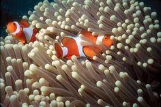 Chai's Marine Life Blog: Colourful underwater animals living on ...