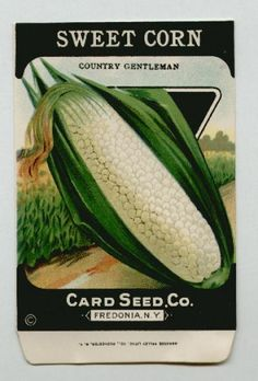 Antique Card Seed Company  Sweet Corn
