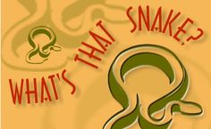 how to identify what kind of snake u r dealin with