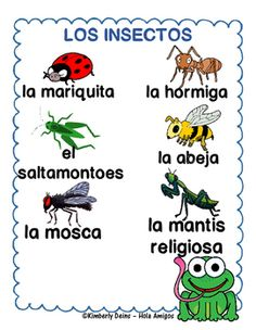 Los Insectos -Spanish insect posters, flash cards color and cut flash cards Learn Spanish Free, Spanish Lessons For Kids, Preschool Spanish, Learning Spanish For Kids, Spanish Basics, Elementary Spanish, How To Teach Kids, Spanish Activities, Spanish Language Learning