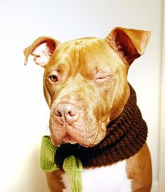 Dog Cowl Brow with Green Bow Large Breed Hand Knit by courtanai, $30.00  -  love you baby !
