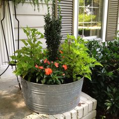 Galvanized tub used for a planter
