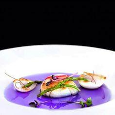 Jelly fish #