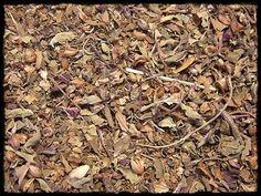 Tulsikraut - (Ocimum sanctum) Indisches Basilikum oder auch Heiliges Basilikum. Sie ist Bestandteil von Ayurveda, der traditionellen indischen Heilkunst und wird in Süd- und Südostasien in der Küche und zum Vertreiben von Insekten verwendet.