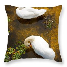 Two swans with sun reflection on water. Throw Pillow by Jan Brons. Two swans with sun reflection on shallow water.  This has been a real challenge to take this photo of these swans as I had to find a high point to shoot downwards.   Digital download of this image is available at http://www.jbstockimages.com/image/two-swans-with-sun-reflection-on-shallow-water/