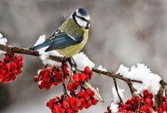 Πώς θα είναι ο φετινός χειμώνας σύμφωνα με τα μερομήνια;;;http://thivarealnews.blogspot.gr/2014/09/blog-post_13.html