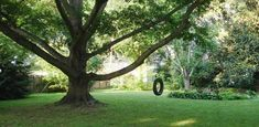 #Tree swing installations must achieve two things: ensure your safety and the tree's health. Here are tips for safe installation of a tree swing. #homeimprovement #diy Tire Swings, Live Oak Trees, How To Make Rope, Mother Earth News, Backyard Paradise, Tree Bark, Growing Tree, Fruit Trees, Tree Branches