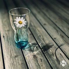 Flower&Caustics on Behance