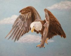 Eagle -  pastel on velour paper Mary Marriner  marymarriner.com
