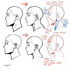Face Profile Drawing, Body Reference Drawing, Guy Drawing, Art Reference Poses, Character Drawing, Anatomy Reference, How To Draw Profile, Figure Drawing, How To Draw Arms