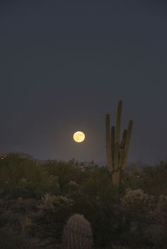 moon with cactus Desert Aesthetic, La Reverie, Desert Dream, Fallout New Vegas, Night Vale, Jolie Photo, Photos, Pictures, Overwatch