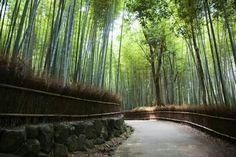 Arashiyama garden in Kyoto, Japan.