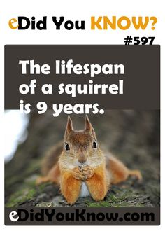 http://edidyouknow.com/did-you-know-597/ The lifespan of a squirrel is 9 years.
