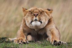 サルが温泉につかりながらiPhoneを...「野生生物写真コンテスト」ノミネート作品10選