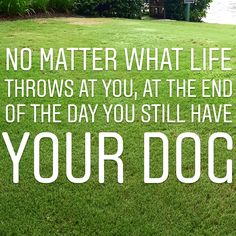At least you still have your dog! Dog Lover Quotes, Dog Lovers, What Is Life About, Still Have, All Dogs, Your Dog, Beautiful Pictures, At Least, Day