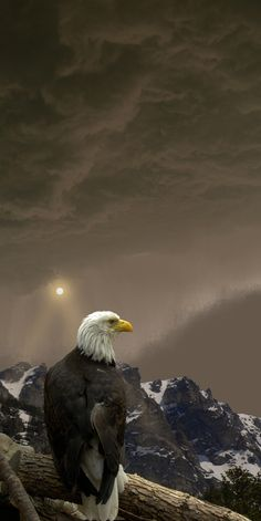 Bald eagle surveys the mountain landscape.