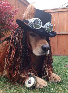 @Deneen Mueller  Steampunk dog costume cute animals halloween crafts diy costumes costume ideas dog costumes pet costume ideas