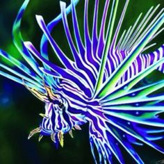 Lion Fish beautiful!!!!