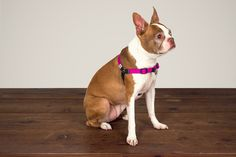 Linden Dog Harness / Fuchsia
