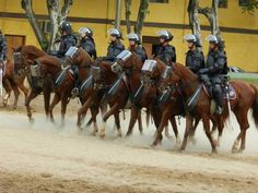 Cavalaria da Tropa de Choque terá proteção extra durante a Copa (Foto: Divulgação/Polícia Militar)