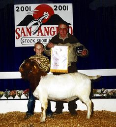 Powell-Holman Reserve Champion Boer Goat Buck. Show Goats for sale.