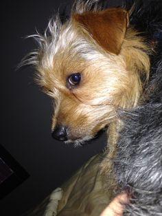 Best grand puppy