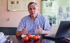 Obținerea semințelor de roșii: tehnica folosită la Stațiunea de la Buzău