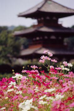 Tgk photo ni teringat 80an, zaman kecik2 dulu. Hokki-ji temple, Nara, Japan. By Eiji Murakami