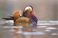 mandarina+duck+by+Stefano+Ronchi+on+500px