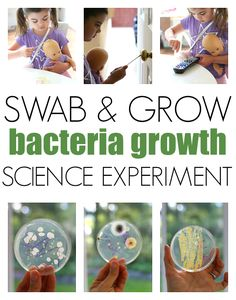 Bacteria growth science experiment