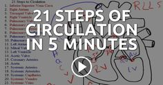 21 Steps of Circulation in 5 Minutes --- From freshman year all the way until graduation, the circulation of the heart will haunt you! But, you can fight back by becoming confident in your cardiac anatomy and physiology as you memorize the 21 steps of circulation. --- #nclex #nursing #nclextips #nclex_tips #nurse #nursingschool #nursing_school #nursingstudent #nursing_student