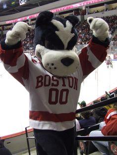 Boston University's mascot Rhett the Terrier strikes a pose for the fans.