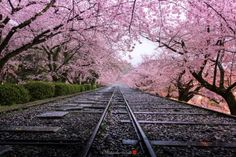 Sakura Sunset Japanese Scenery Of The Sunset Of Spring You Will - Calming photos of japans landscapes captured by hidenobu suzuki