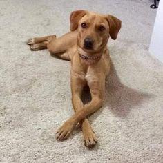 Adoptable Rescue Dog Calgary Alberta Canada