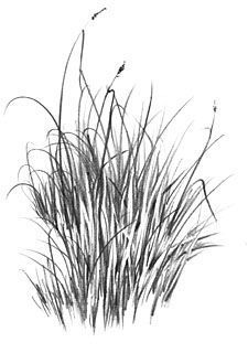 """How to Draw Grass (An introduction to """"Negative"""" drawing)"""