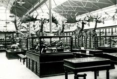The giant deer weren't always at the front of the ground floor @NMIreland. They used to live in the Fossil Hall, demolished in 1962 to allow for the restaurant of the parliament next door.