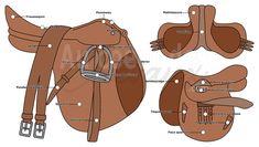 Récapitulatif des différentes parties de la selle anglaise Horse Facts, Illustrations, Horse Care, Horse Riding, Aide, Cow, Horses, Pets, Reading