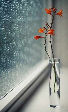 Vase on Window Sill with Orange Flowers Beautiful Flowers, Beautiful Pictures, Cool Flowers, Rain Flowers, Love Images, Fresh Flowers, Simply Beautiful, I Love Rain, Deco Floral