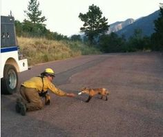 "GOD Bless all the fire fighters and emergency personnel risking their lives to fight the fires in Colorado and save people, pets, and the wild animals.  Carla Moravek who says, ""My husband feeds this little fox every ...morning before he fights the fires at Waldo Canyon."" This fireman is just trying to help the little fox who probably has no way of getting food right now! HEROES!!! This is just a beautiful pic of compassion shown..... after devastation."