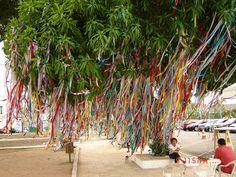 Cabelo de árvore - Belém-PA