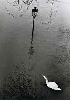 liquidnight:    André Kertész  Paris, 1982  From André Kertész by Noël Bourcier  Thank you liquidnight.