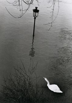 by Andre Kertesz Minimalist Photography, Urban Photography, Color Photography, Film Photography, Street Photography, Andre Kertesz, Budapest, Swans, New York City