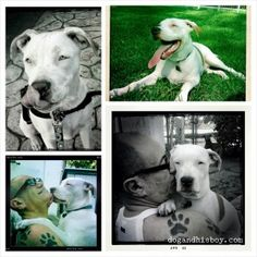 Living with and Training a Deaf Dog: comprehensive, easy-to-follow guide on raising a deaf dog